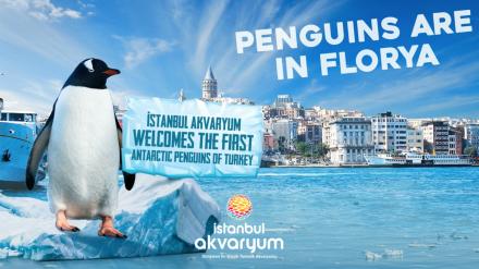 ISTANBUL AKVARYUM BANNER